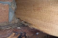 R1_10419_Termites_7