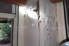 R1_5419_Termites_60