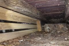R1_200319_Termites_6