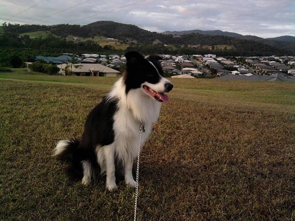 Ormeau Hills Dog Walking